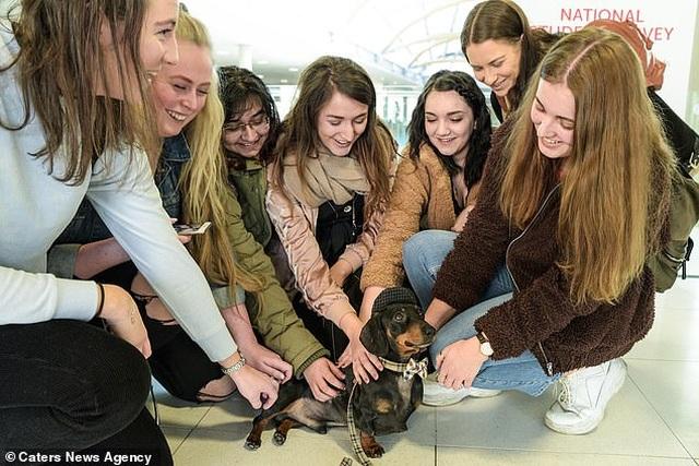 Anh: Chú chó hỗ trợ tâm lý cho sinh viên đại học - 1