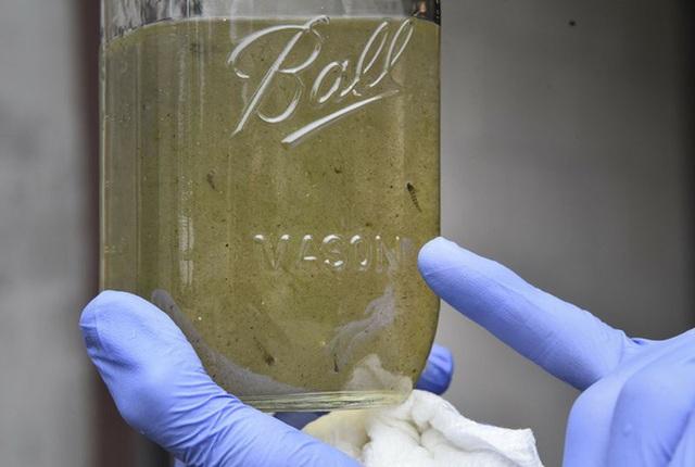 Vi nhựa trong nước uống có gây nguy cơ cho sức khỏe không? - 1