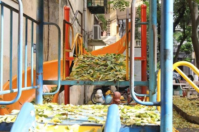 Hàng cây sưa quý ở Hà Nội bất ngờ rụng lá sau khi từ chối bán - 10