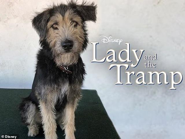 """Câu chuyện có thật về chú chó lang thang suýt mất mạng trở thành """"ngôi sao điện ảnh"""" - 2"""