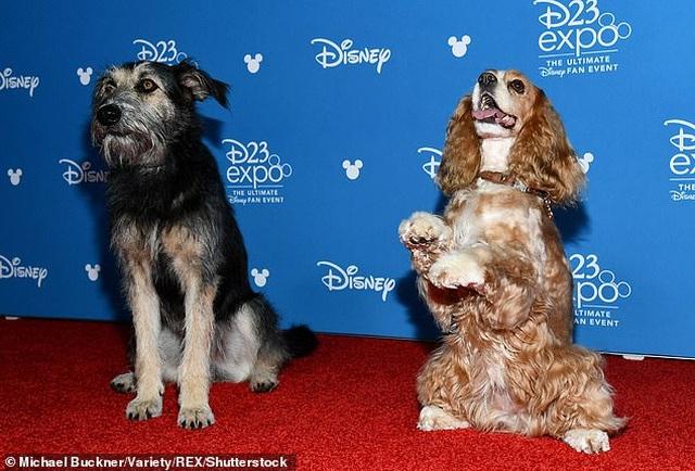 """Câu chuyện có thật về chú chó lang thang suýt mất mạng trở thành """"ngôi sao điện ảnh"""" - 3"""
