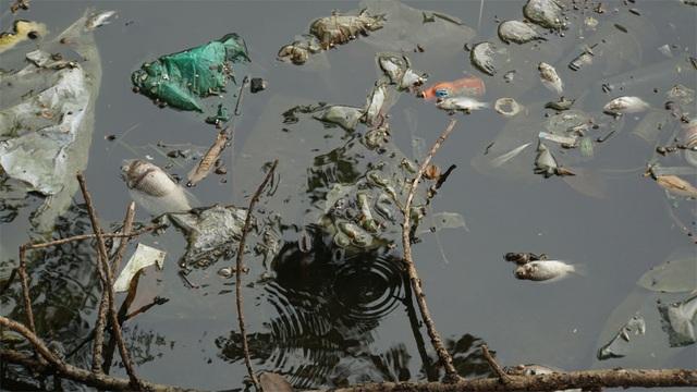 Cá chết nổi bốc mùi hôi thối ở Hồ Tây, hồ Hồ Đắc Di - 2