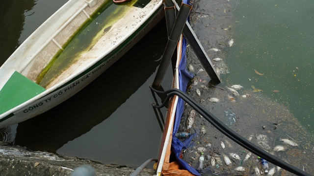 Cá chết nổi bốc mùi hôi thối ở Hồ Tây, hồ Hồ Đắc Di - 12