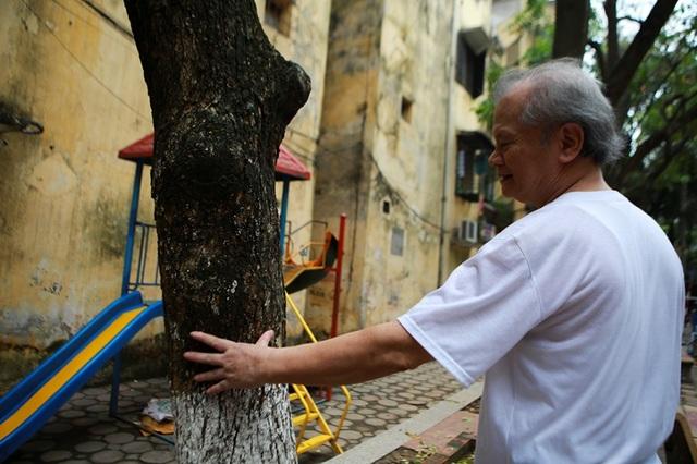 Cả khu dân cư Hà Nội cứu 3 cây sưa quý nghi bị bỏ độc - 3