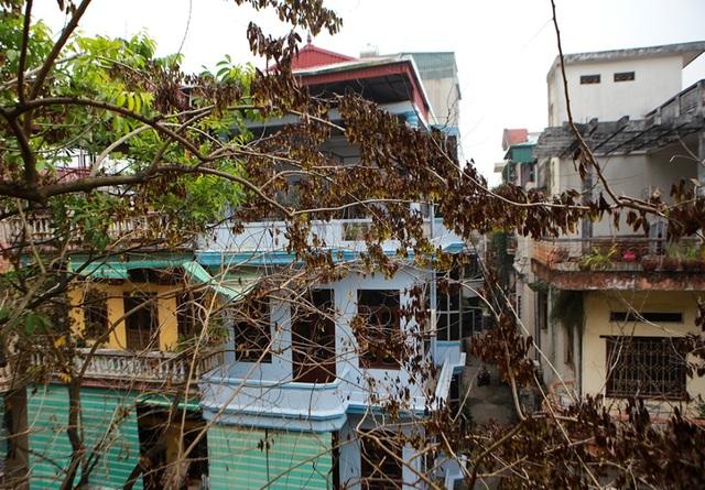 Cả khu dân cư Hà Nội cứu 3 cây sưa quý nghi bị bỏ độc - 4