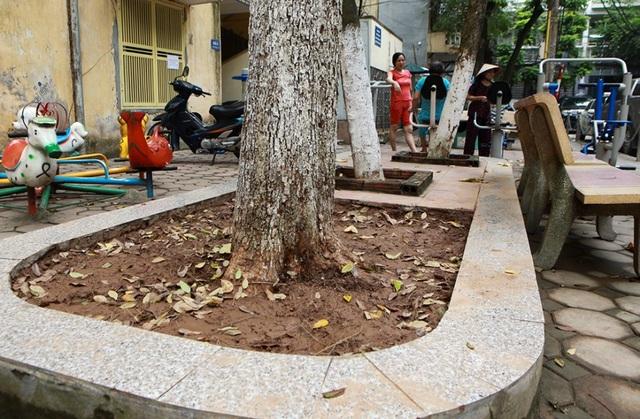 Cả khu dân cư Hà Nội cứu 3 cây sưa quý nghi bị bỏ độc - 8