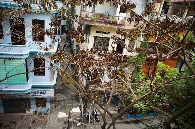 Cả khu dân cư Hà Nội cứu 3 cây sưa quý nghi bị bỏ độc - 9