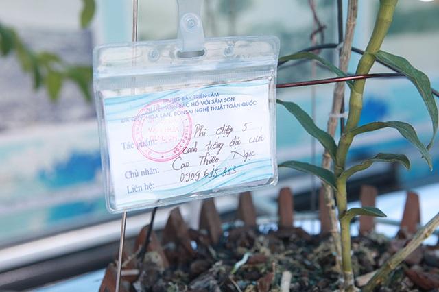 Cây lan phi điệp 5 cánh trắng độc cước, cao có 20cm mà giá 500 triệu đồng - 4