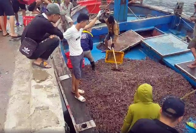 Ngư dân trúng đậm ốc xoắn và sò bi, đút túi hàng triệu đồng/chuyến ra biển - 1