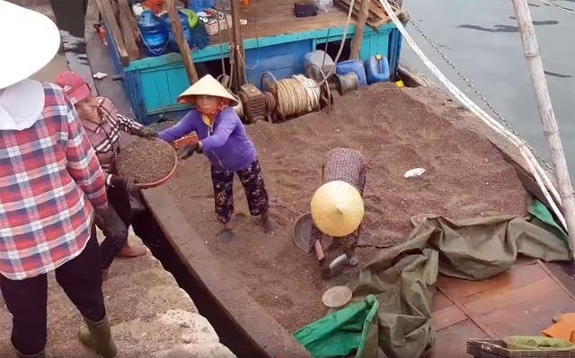 Ngư dân trúng đậm ốc xoắn và sò bi, đút túi hàng triệu đồng/chuyến ra biển - 10