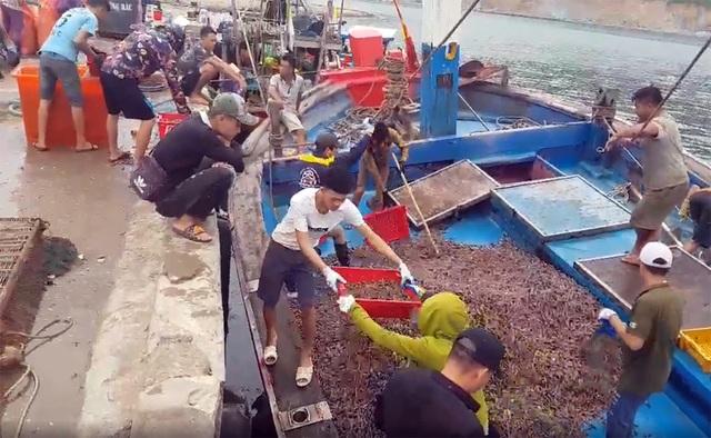 Ngư dân trúng đậm ốc xoắn và sò bi, đút túi hàng triệu đồng/chuyến ra biển - 3