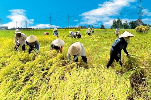 Hà Tĩnh chỉ đạo khẩn trương thu hoạch lúa trước khi bão Podul càn quét - 1