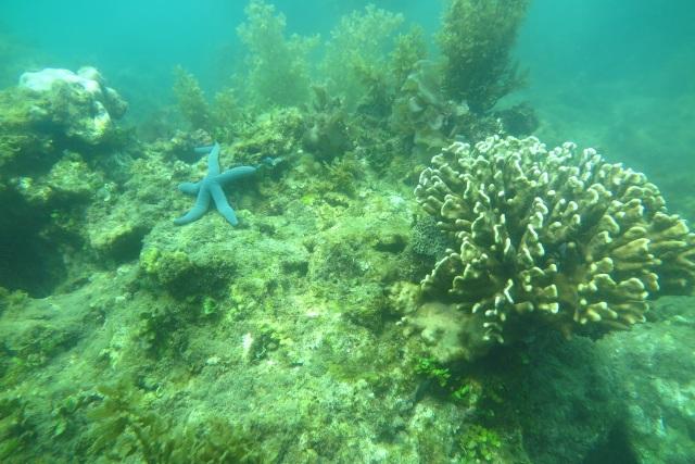 Hỗ trợ 100.000 USD nghiên cứu phục hồi, tái tạo san hô tại vịnh Nha Trang - 2