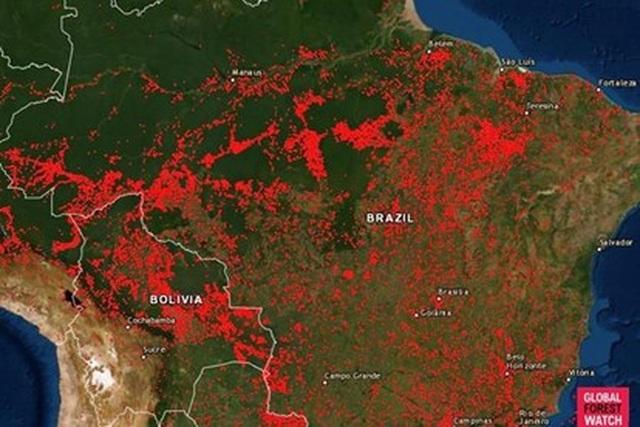 Điều gì sẽ xảy ra nếu đám cháy thiêu rụi toàn bộ rừng Amazon? - 1