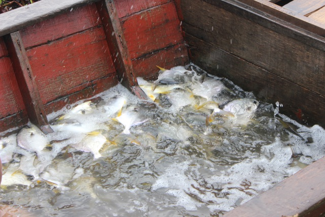 Người dân gạt bèo gánh cá đặc sản chạy mưa bão - 6