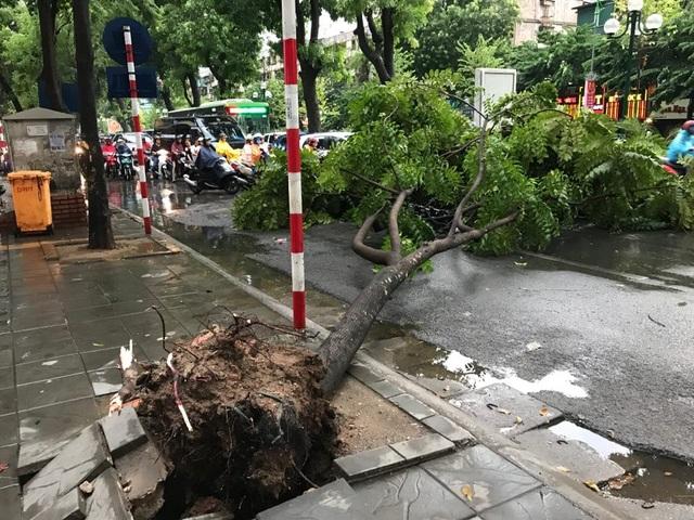 Hà Nội: Cây xanh đổ ngổn ngang, chèn bẹp ô tô, đè chết người trong giông lốc khủng - 2
