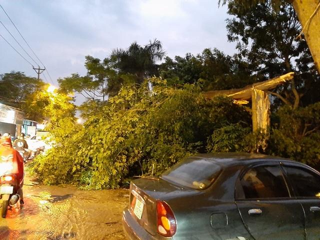Hà Nội: Cây xanh đổ ngổn ngang, chèn bẹp ô tô, đè chết người trong giông lốc khủng - 7