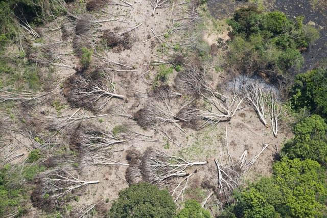 Điều gì sẽ xảy ra nếu đám cháy thiêu rụi toàn bộ rừng Amazon? - 3
