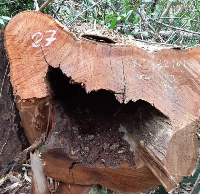 Tạm giam 3 đối tượng trong vụ phá rừng quy mô lớn tại Vườn quốc gia Pù Mát - 3