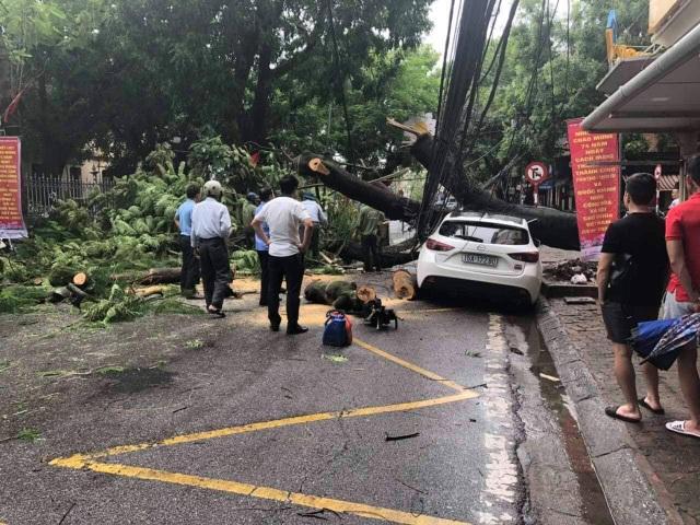 Cây to đổ ngang đường trong cơn mưa lớn, một phụ nữ bị thương - 1