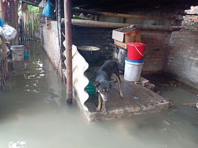 Dân thành phố khốn khổ vì... lội nước ngập - 8