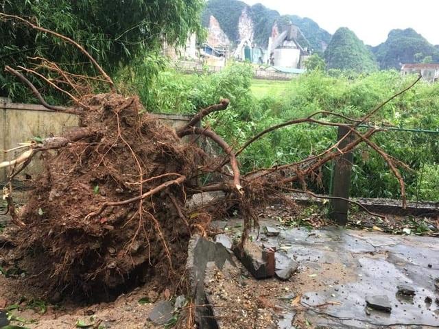 Giông lốc tàn phá hàng chục ngôi nhà, hàng trăm cây xanh - 8