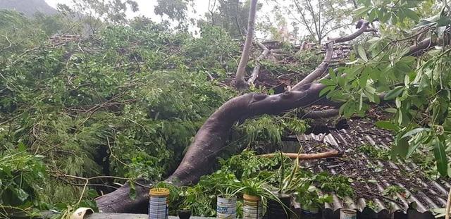 Giông lốc tàn phá hàng chục ngôi nhà, hàng trăm cây xanh - 4