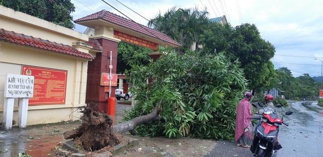 Giông lốc tàn phá hàng chục ngôi nhà, hàng trăm cây xanh - 6