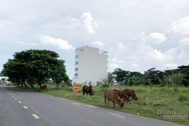 Chuyện lạ ở TP.HCM: Nơi giá đất 300 triệu đồng/m2, biệt thự xây dở không người ở - 6