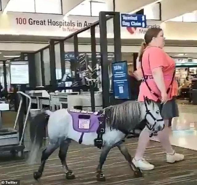 Nữ hành khách mang ngựa lên máy bay Mỹ  - 2