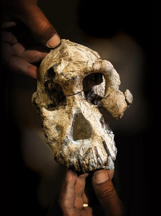 Gương mặt của tổ tiên xa xưa nhất của loài người được tiết lộ - 2