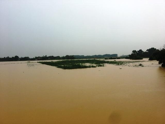 Nước sông lên báo động 2, hàng nghìn hộ dân bị cô lập - 4