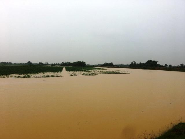 Nước sông lên báo động 2, hàng nghìn hộ dân bị cô lập - 11