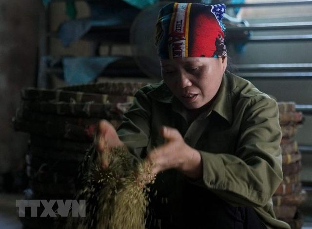 Những hình ảnh về nghề làm tương bần ở tỉnh Hưng Yên - 5