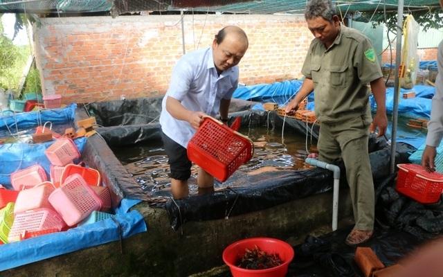 Phát hiện một cơ sở nuôi hơn 7.000 con tôm hùm đỏ - 1