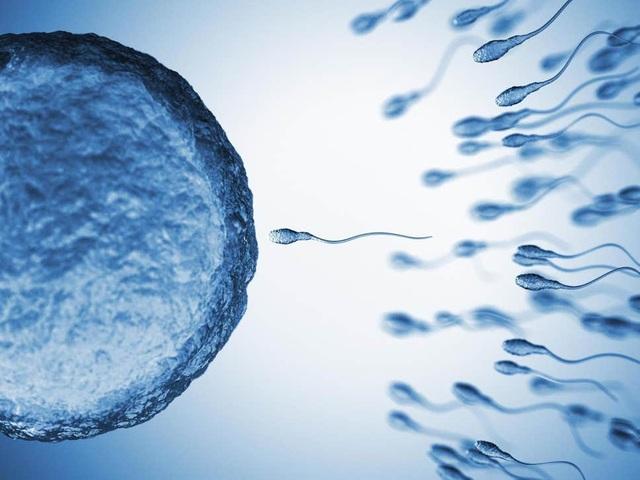 Có thể lựa chọn giới tính cho những cặp chuột thụ tinh nhân tạo - 1