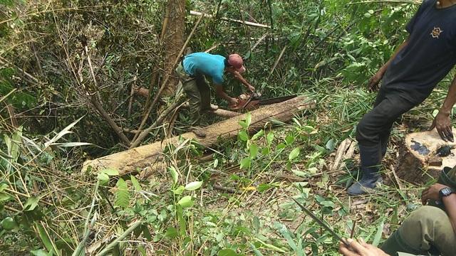 """Tiếng thét đau đớn của rừng xanh Tây Nguyên: """"Nếu đủ yếu tố sẽ khởi tố""""! - 3"""