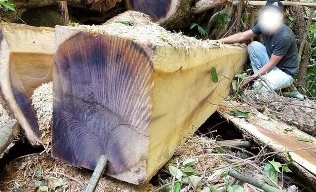 Tiếng thét đau đớn của rừng Tây Nguyên: Chính kẻ nhận tiền giữ rừng... phá rừng! - 2