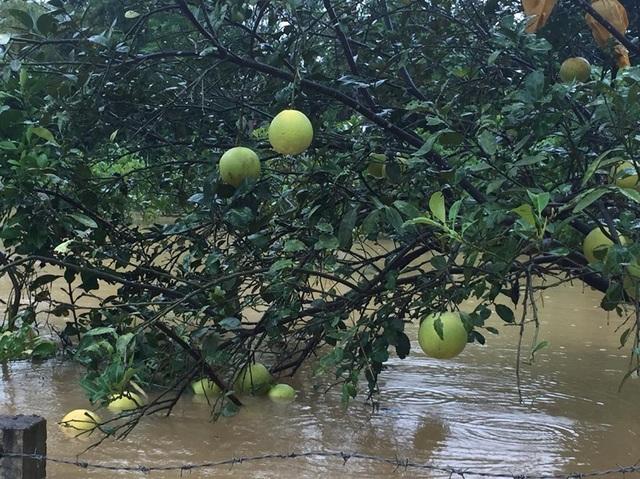 Hà Tĩnh: Các trường đồng loạt cho học sinh nghỉ học vì mưa lớn - 3