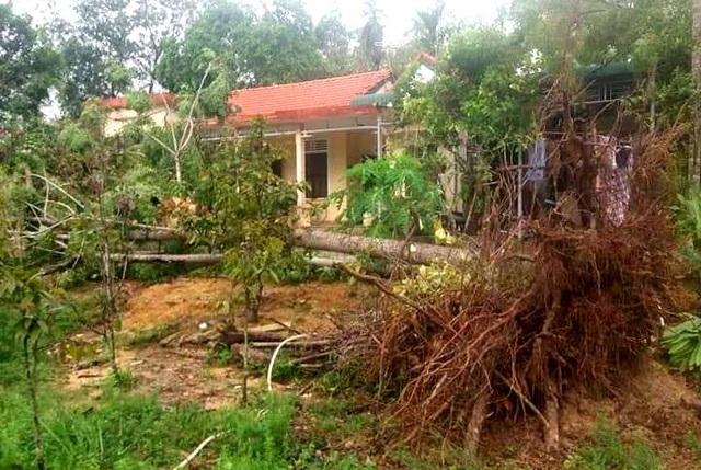 Cây xanh đổ la liệt tại Thừa Thiên Huế - 2