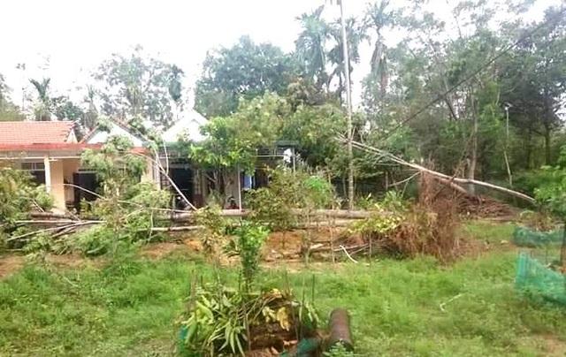 Cây xanh đổ la liệt tại Thừa Thiên Huế - 12