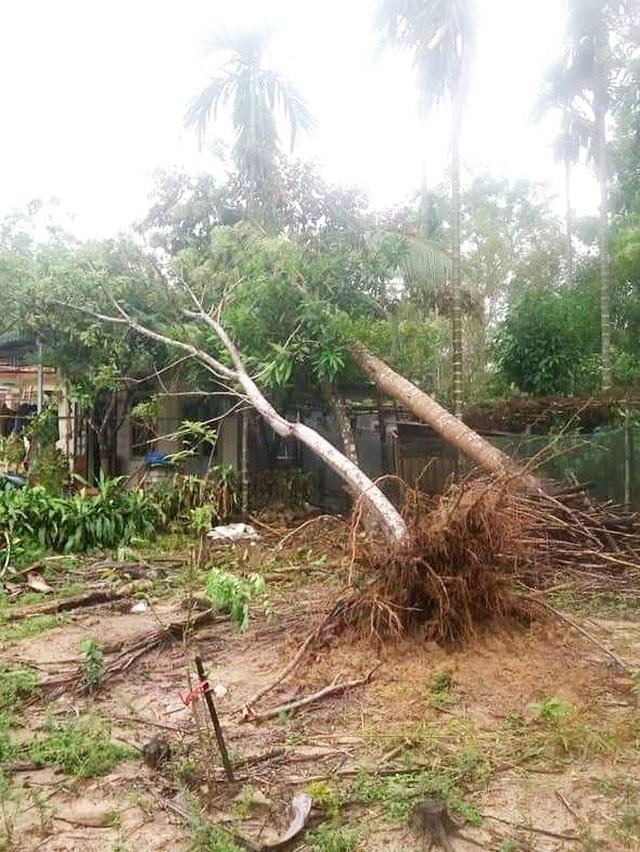 Cây xanh đổ la liệt tại Thừa Thiên Huế - 10