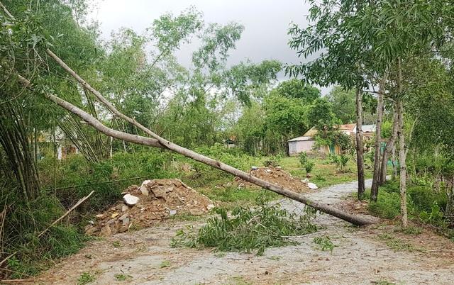 Cây xanh đổ la liệt tại Thừa Thiên Huế - 9