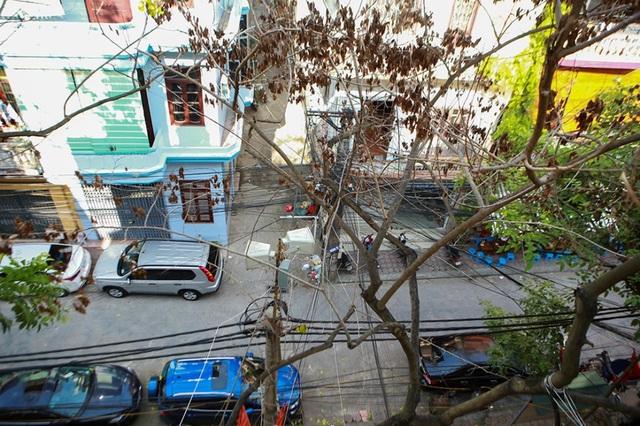 Hàng sưa nghi bị đầu độc ở Hà Nội đã khô héo - 10