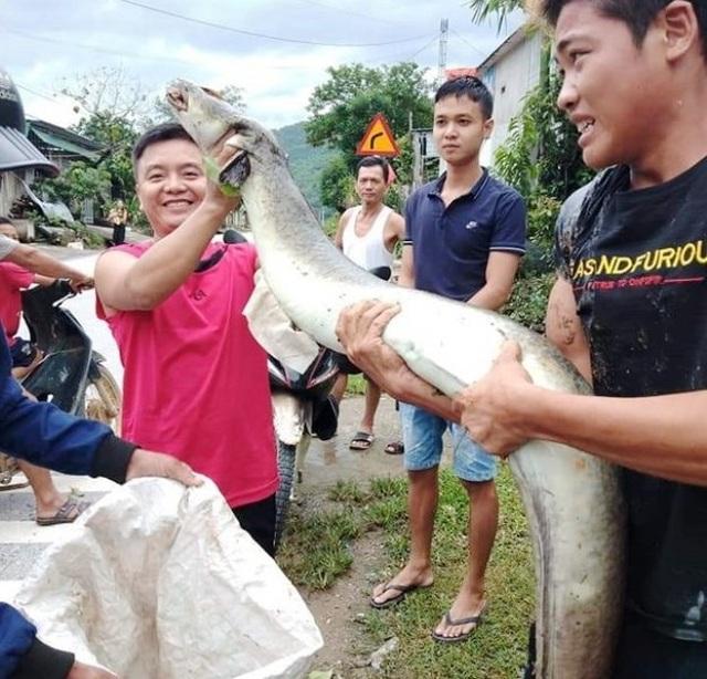Cá lệch dài 2m chết trôi trên sông, người dân vớt đem bán 5 triệu đồng - 1