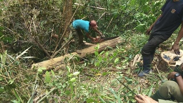 Tiếng thét đau đớn của rừng Tây Nguyên: Chính kẻ nhận tiền giữ rừng... phá rừng! - 5