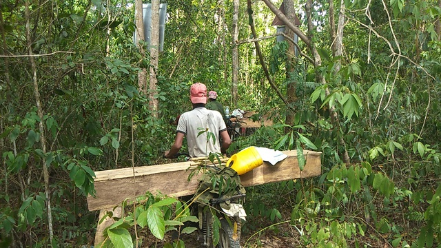 Tiếng thét của rừng Tây Nguyên: Chính kẻ nhận tiền giữ rừng... phá rừng! - 7