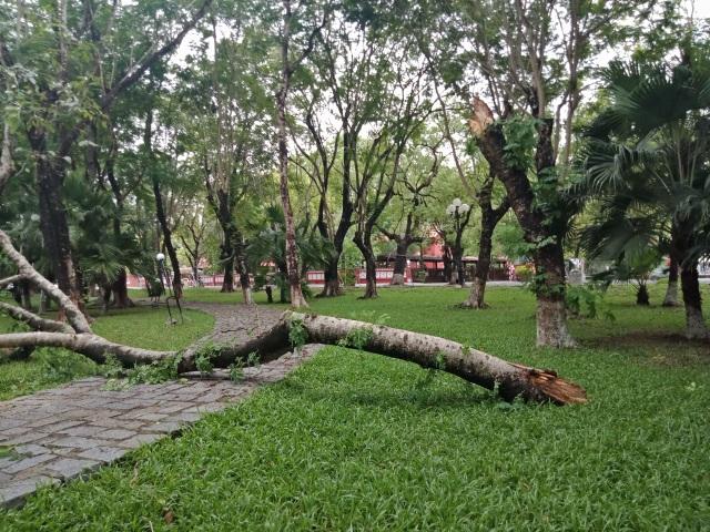 Cây xanh đổ la liệt tại Thừa Thiên Huế - 6