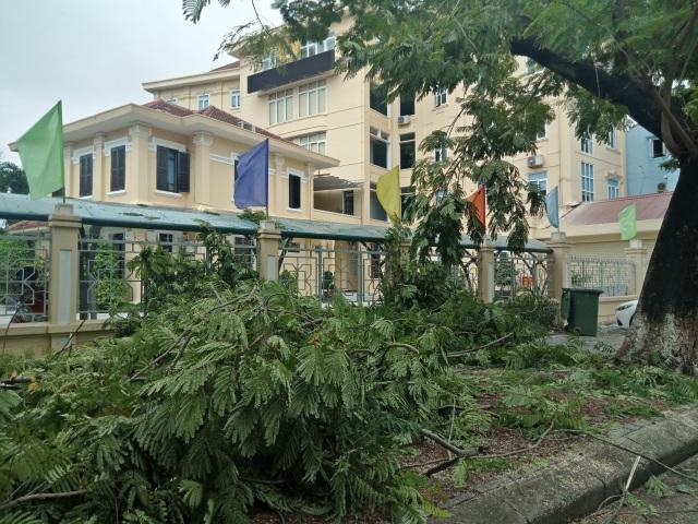 Cây xanh đổ la liệt tại Thừa Thiên Huế - 5