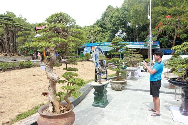 Ngắm cây hoa giấy bonsai được tạo tác như thác đổ - 1